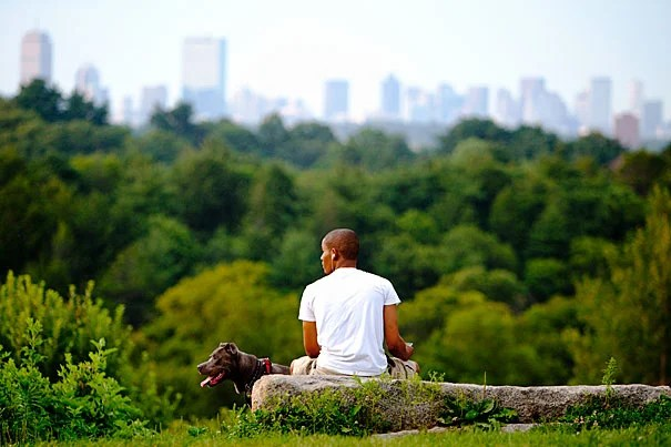 A man and his dog observe a view of Boston from Peters Hill in Harvard's Arnold Arboretum, which is the site of an 18th-century burial ground.