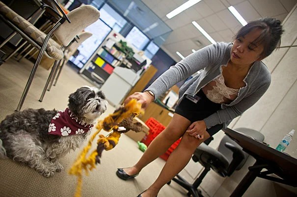 """""""Harvard can be a very fast-paced and stressful environment,"""" said Loise Francisco, a senior research fellow at Harvard Medical School and the owner of Cooper, a 4-year-old Shih Tzu and registered therapy dog who can be checked out from the Countway Library of Medicine."""