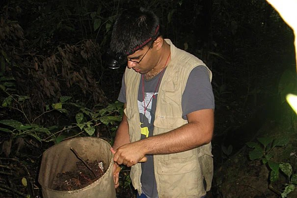 OEB graduate student Prashant Sharma sifts leaf litter gathered from the forest floor on Mount Makiling during a trip to Luzon Island in the Philippines in August 2010. Sharma and other researchers in search of harvestmen look for movement against the white tray to find the creatures, camouflaged to blend in with the dead leaves.