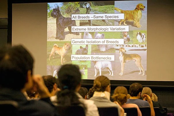 In the genes of dogs, researchers not only learn more about specific breed traits, they also gain insight into similar human traits that might be related to disease, explained Elaine Ostrander, who runs a comparative genetics laboratory at the National Institutes of Health's National Human Genome Research Institute.