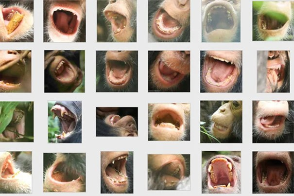 A sample of the hundreds of dental images collected during the 21-month photographic study.