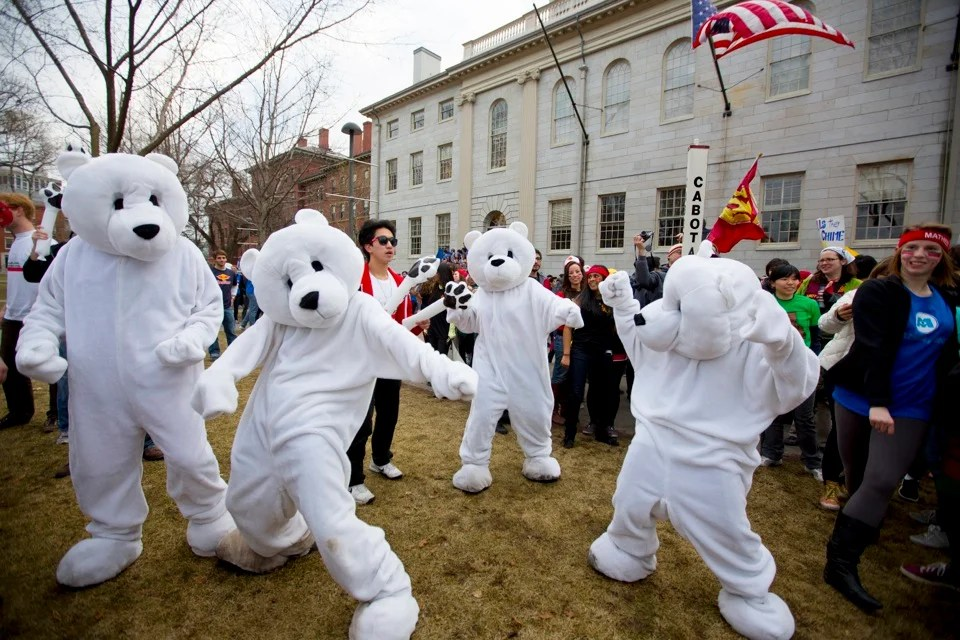 Pforzheimer polar bears dance in the Yard in honor of Harvard's Housing Day, the annual celebration when freshmen learn where they'll be living next year. The Houses colorfully compete to show the most spirit.