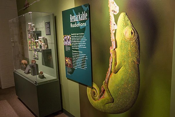 "Efforts by Harvard faculty to understand island evolution form the centerpiece of a new exhibition at the Harvard Museum of Natural History. ""Islands: Evolving in Isolation"" includes specimens from the collections of the Museum of Comparative Zoology, explanatory displays, video of Harvard scientists discussing their work, and living things — lizards, hissing cockroaches, and carnivorous pitcher plants."