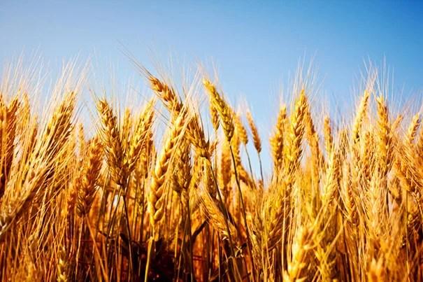 Studies quantify potential effects of pollinator declines, decreased zinc levels in food.