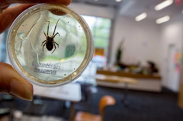 "The Harvard Ed Portal hosted ""Spider Superheroes,"" a program for Gardner Pilot Academy third-graders to learn about spiders."
