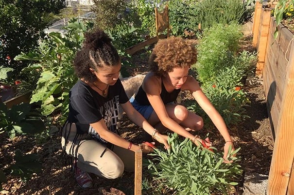 Los Angeles high school student Mikayla (left) and Amanda Beattie '17 harvest sage at the L.A. farm where Beattie did an internship through Harvard's Mindich Service Fellowships.