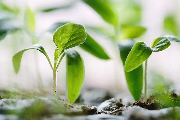 A mathematical framework developed by researchers at the Harvard John A. Paulson School of Engineering and Applied Sciences can explain how a plant stem's sense of itself and its environment contributes to its growth upward or downward.