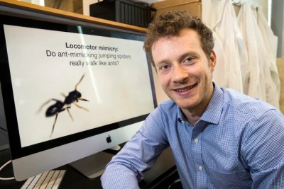 Paul Shamble, John Harvard Distinguished Science Fellow, has done research on how a particular species of spider mimics the behavior of ants to camouflage itself from predators.
