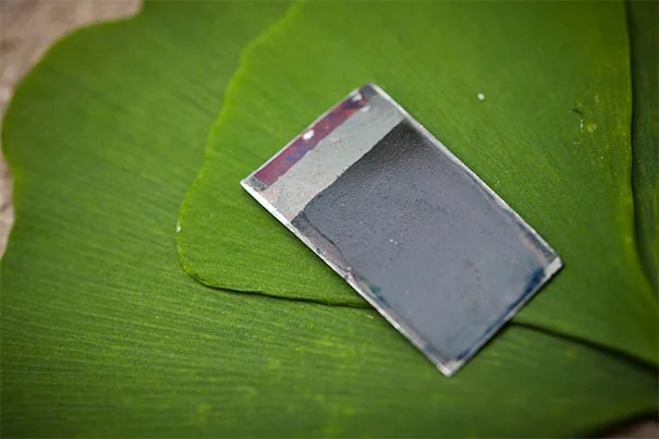 """Professor Rohini Pande and Professor Daniel Nocera will collaborate to bring Nocera's """"bionic leaf"""" together with Pande's policy research to inform the adoption of the clean energy in India."""