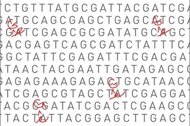 Harvard and Broad Institute researchers have developed a DNA base editor that transforms A•T base pairs into G•C base pairs, and could one day be used to treat many common genetic diseases.