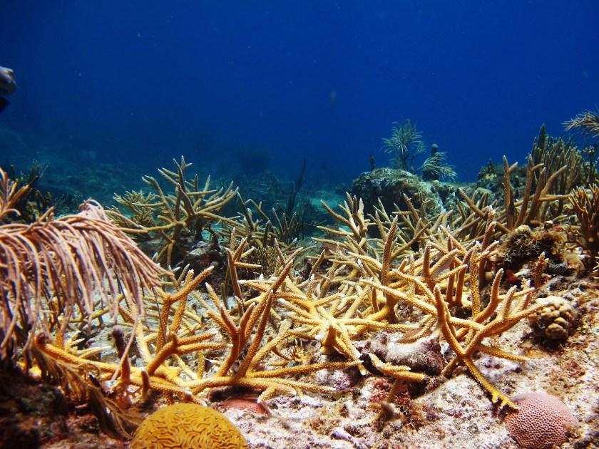 Harvard research explores impact of coral restoration