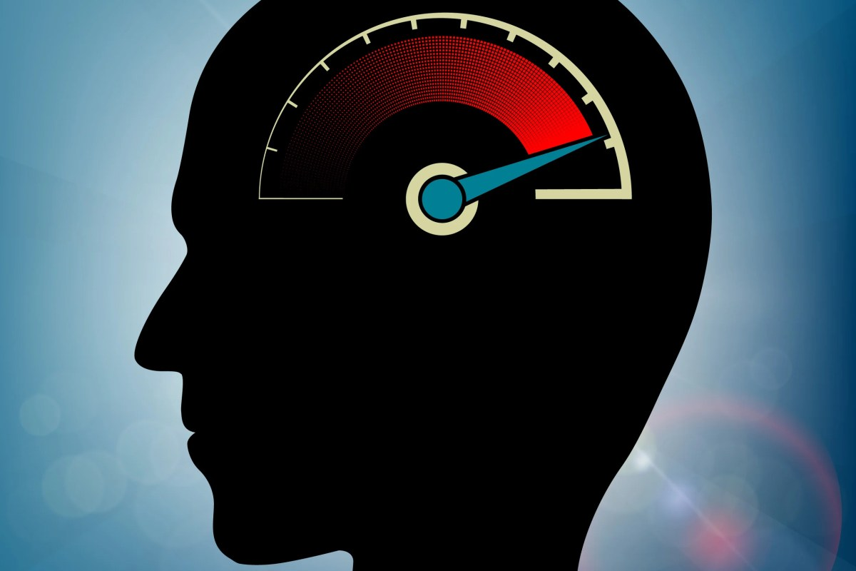 a volume control for the brain harvard gazette