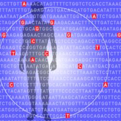 Polygenic risk scoring flags likelihood of developing common diseases