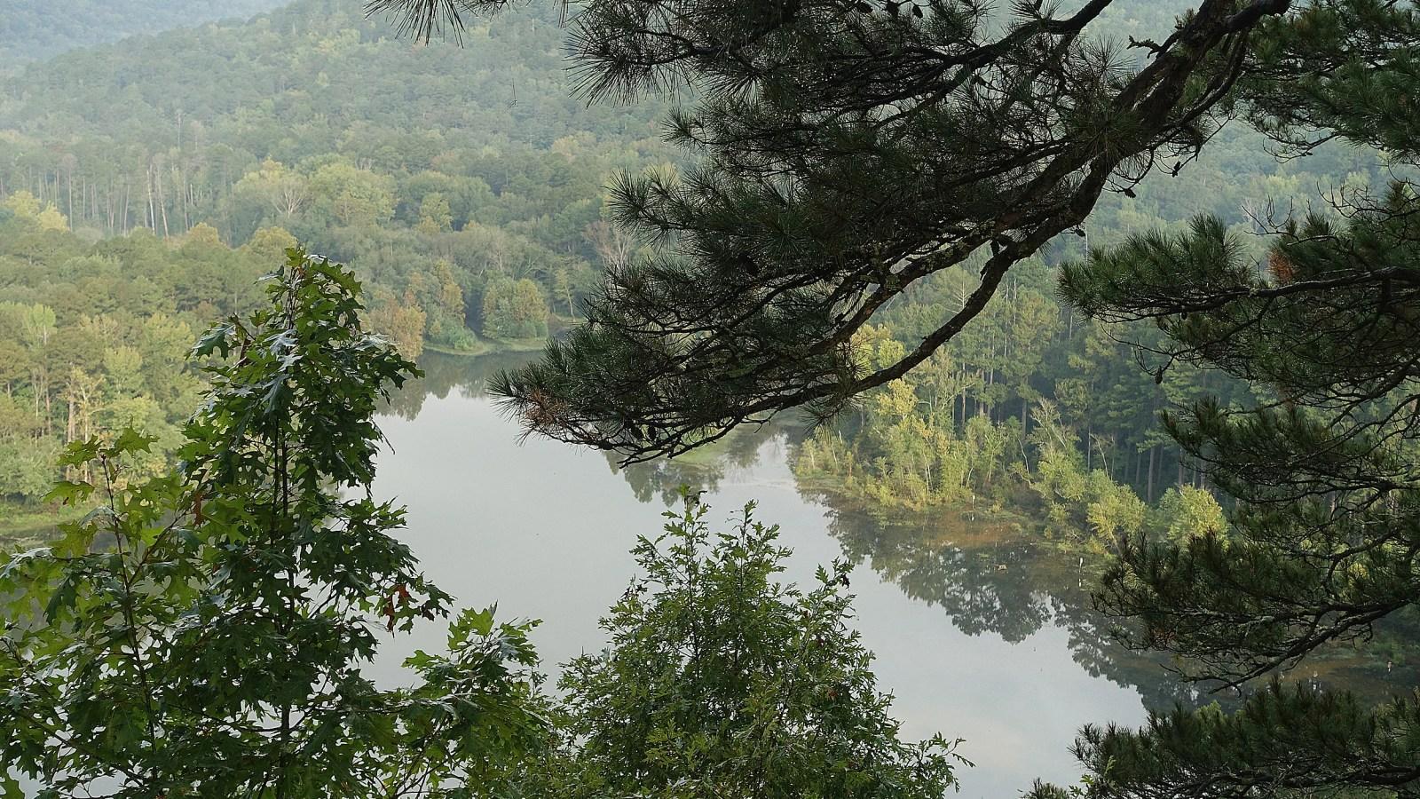 The Ozark National Forest in Arkansas.
