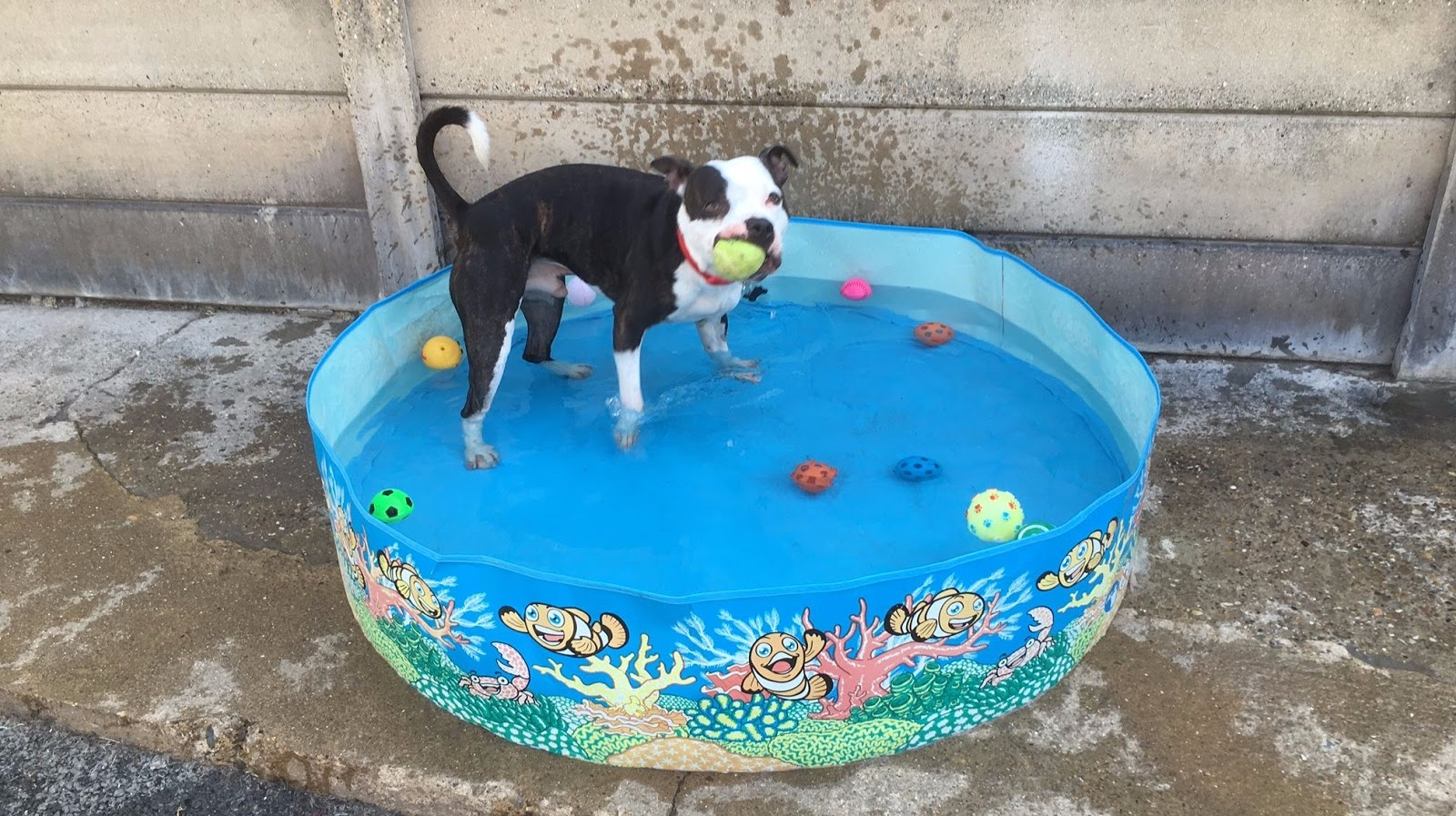 Rspca Receives Rise In Calls To Animals Suffering In Hot Weather Meridian