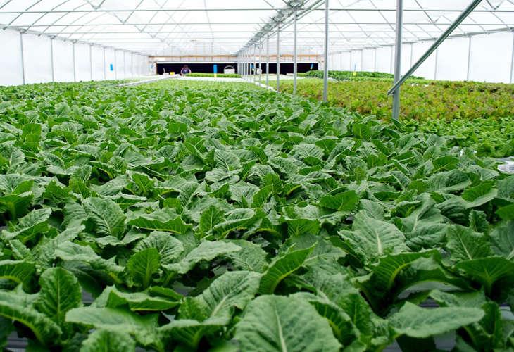 Премьер-министр Тайваня обещает содействовать развитию органического сельского хозяйства