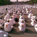 Представители «Тайцзимэнь» арестованы в Президентском дворце