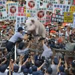 США поставляет на Тайвань свинину, накачанную рактопамином