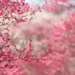 Погребение в эко-урнах предлагает стать деревом после смерти