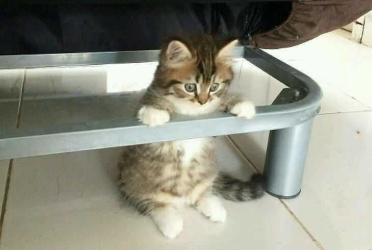 Разведение и продажа кошек потребует особое разрешение