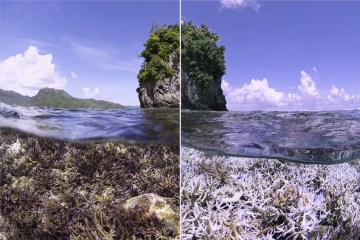 Exclusive 'Chasing Coral' Interview with Filmmaker Jeff Orlowski