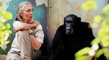 Jane Goodall Blazed the Trail…The Next Steps Are up to Us.