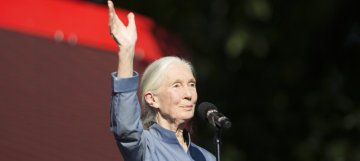 Dr. Jane Goodall's New Year Message for 2018