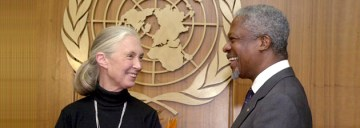 Dr. Jane Goodall Mourns the Loss of Kofi Annan