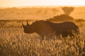 Celebrating World Rhino Day by Standing Up For Rhinos
