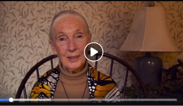 Dr. Jane Goodall's Most Inspiring Quotes from 2018