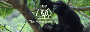 The Forest is Calling – Answering the Call is Our Only Hope.