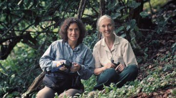 Dr. Elizabeth Lonsdorf Is Taking Chimpanzee Research to the Next Level