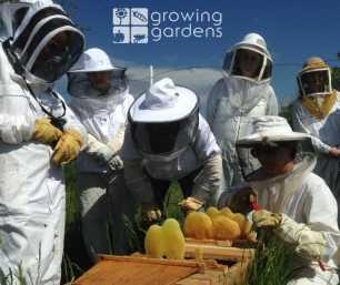 growing gardens bees