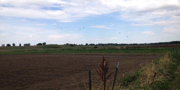 Regenerative Agriculture in Boulder County