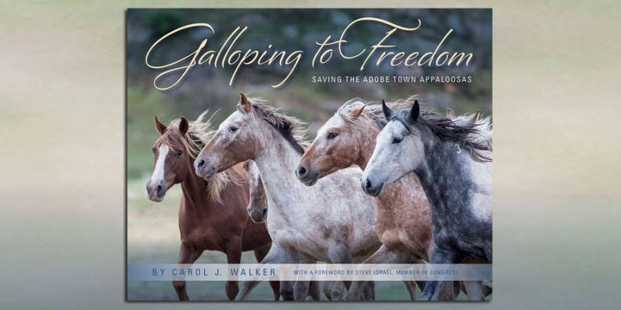 Galloping To Freedom