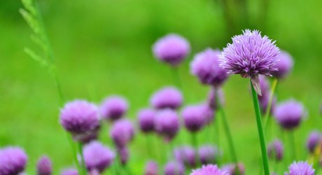 Naturally: Flower Power
