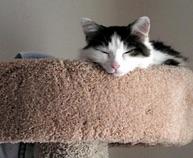 cat-care-society