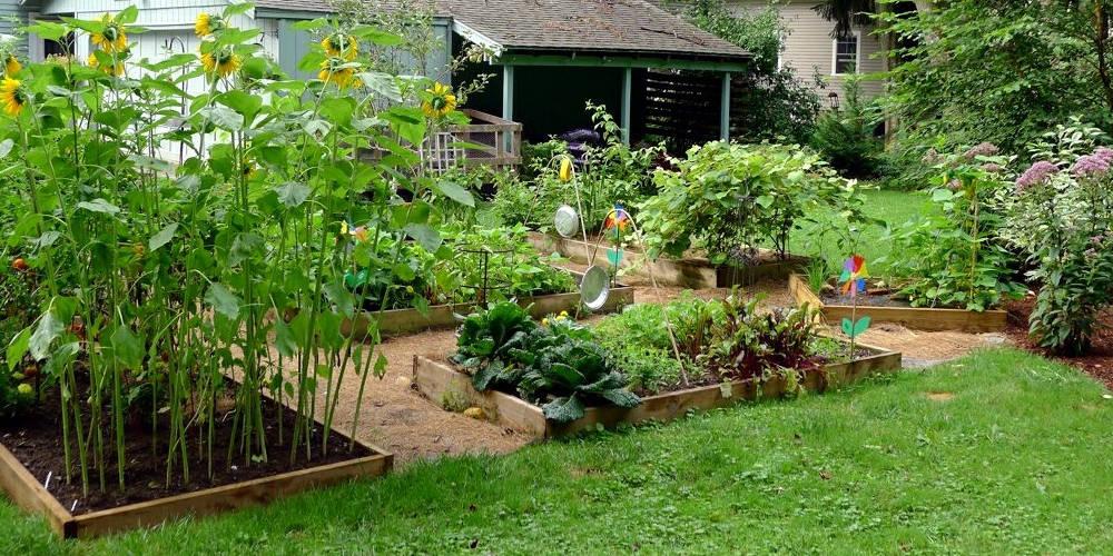 KGNU Plant Sale: Master Gardener Advice