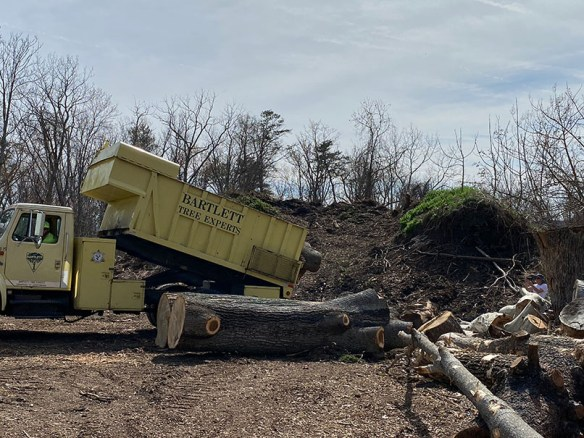 A yellow Bartlett tree services truck, its bed raised to unload logs, adding to other logs already at the Observatory Hill log yard