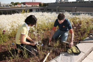 Your Green Home: Investing in a Green Roof
