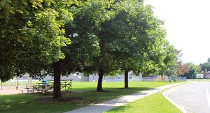 City of Markham Aims to Redouble Tree-Planting Efforts in 2015