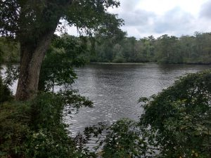 Photo of Pocomoke River State Park