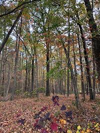 Understory at Harriet Tubman Underground Railroad State Park, photo by Dana Paterra