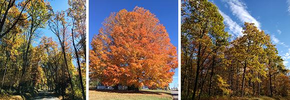 Autumn Glory Rules in Garrett County