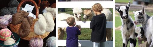 Maryland Alpaca and Fleece Festival
