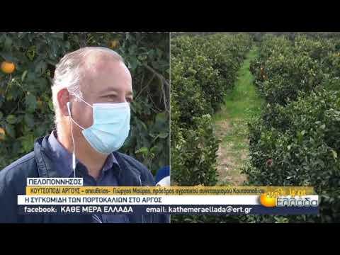 Η συγκομιδή των πορτοκαλιών στο Άργος | 30/11/2020 | ΕΡΤ