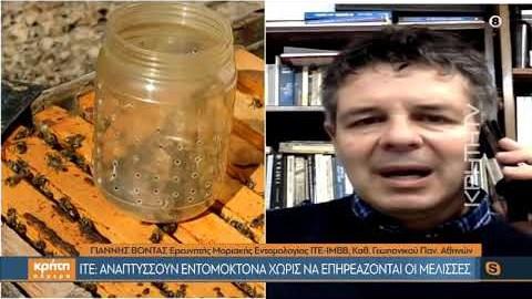 ΙΤΕ: Αναπτύσσουν εντομοκτόνα χωρίς να επηρεάζονται οι μέλισσες