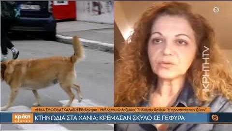 Κτηνωδία στα Χανιά: Κρέμασαν σκύλο σε γέφυρα