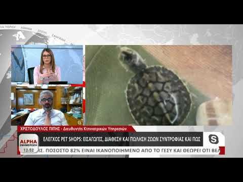 Ο Χριστόδουλος Πίπης για τις χελώνες-μπομπονιέρες
