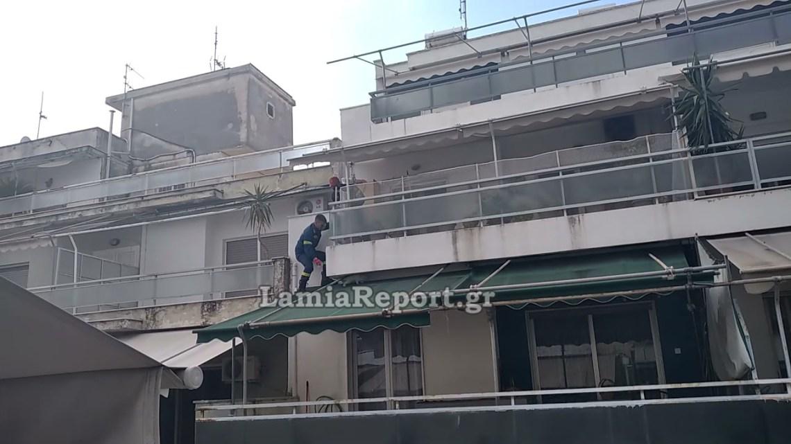 LamiaReport.gr: Έπιασαν το άτακτο κουνέλι